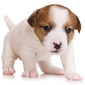 Guess The Puppy 2 Trivia Game icon
