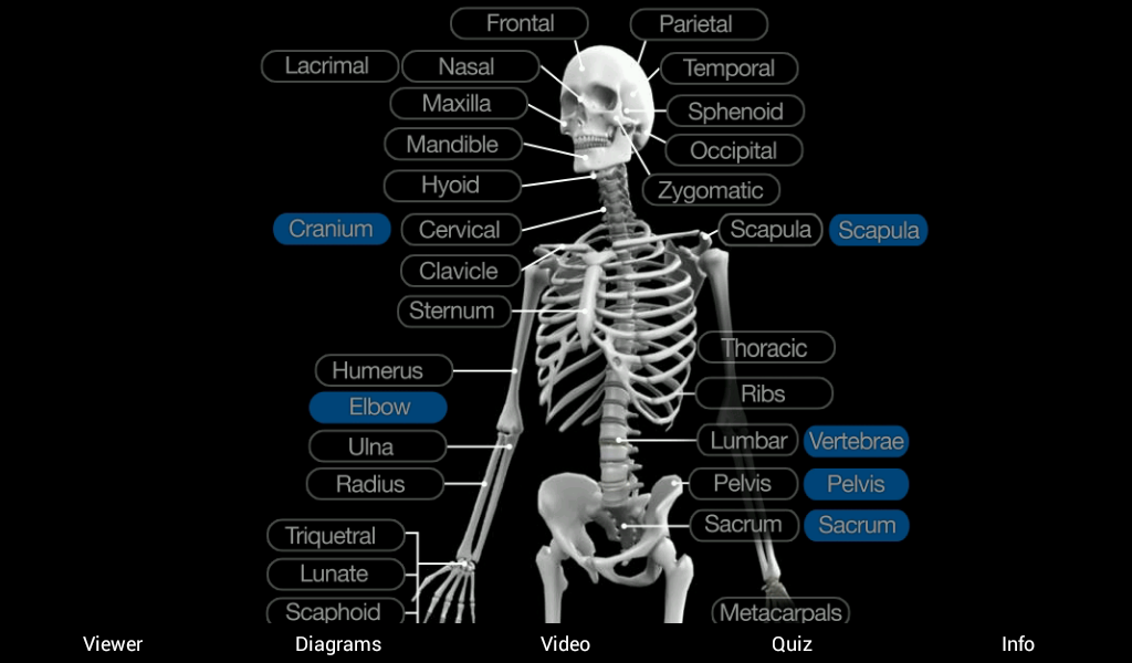 skeletal anatomy 3d - android apps on google play, Skeleton