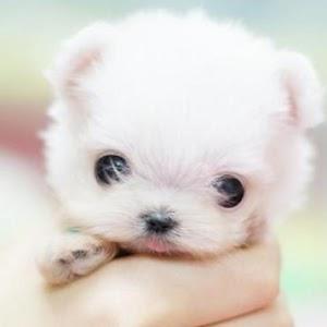 Mini Pets 個人化 LOGO-玩APPs
