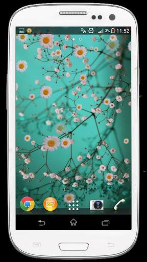 Falling Sakura Live Wallpaper