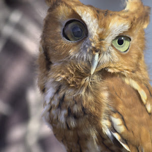 tiny owl.jpg