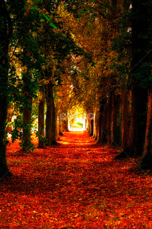 by Alexandre Soares - Nature Up Close Trees & Bushes ( dramatic landscapes, forests, earthly, colorful, jade, green, mood, scenic, relaxing, landscape, revive, fall leaves on ground, fall leaves, nature, color, emotions, fall, path, trees, meditation, landscapes, the mood factory, renewal, natural, inspirational )