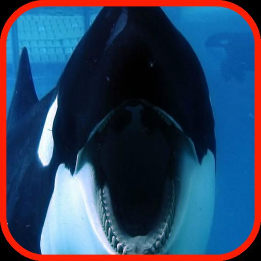 虎鯨壁紙 LOGO-APP點子
