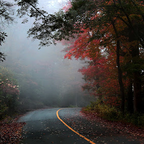 fall is just round the corner by Sunil Pawar - Landscapes Forests ( smokey, mountains, grand, autumn, foliage, colors, fall,  )
