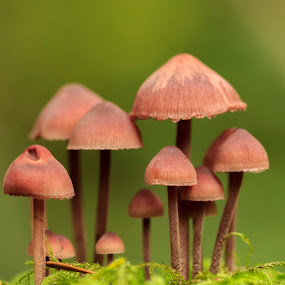 Mushroom City by Nico Carbajales - Nature Up Close Mushrooms & Fungi
