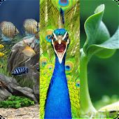 گیاهان، حیوانات، آکواریوم