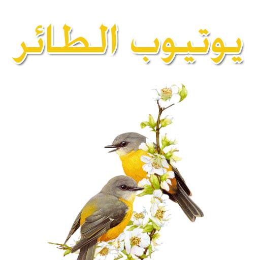 يوتيوب الطائر