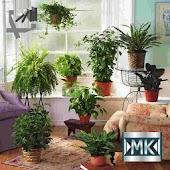Комнатное садоводство