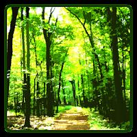 Forest Wallpaper 1.0