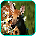 Deer Wallpaper icon