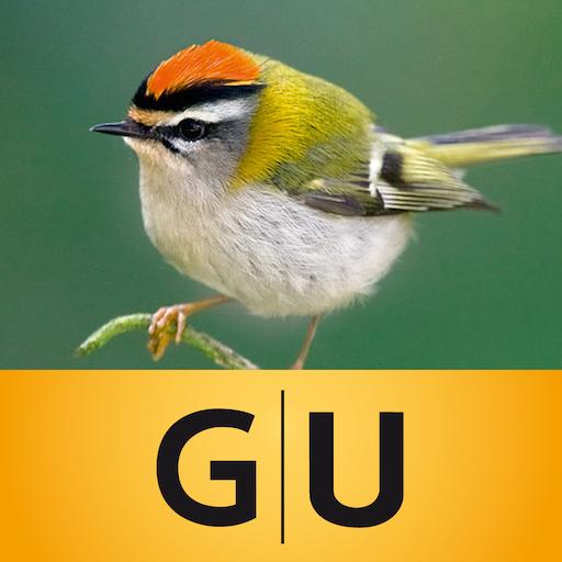 Vögel bestimmen