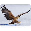 Eagle Photography logo