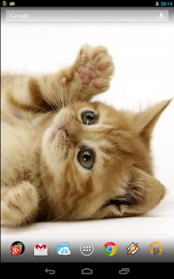 Playful ginger kitten- screenshot thumbnail
