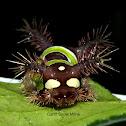 Saddleback Caterpillar Moth larvae