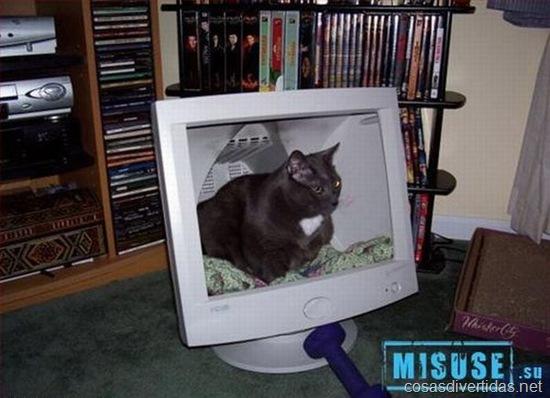 Chapuza, cama para al gato dentro de una antigua pantalla de PC)