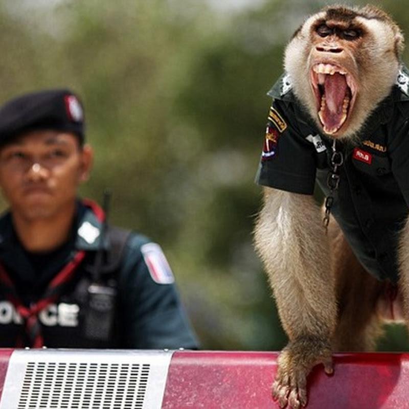 El primer mono policía