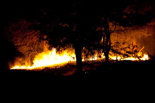 Лесные пожары в Тольятти