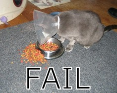 Fail gatto