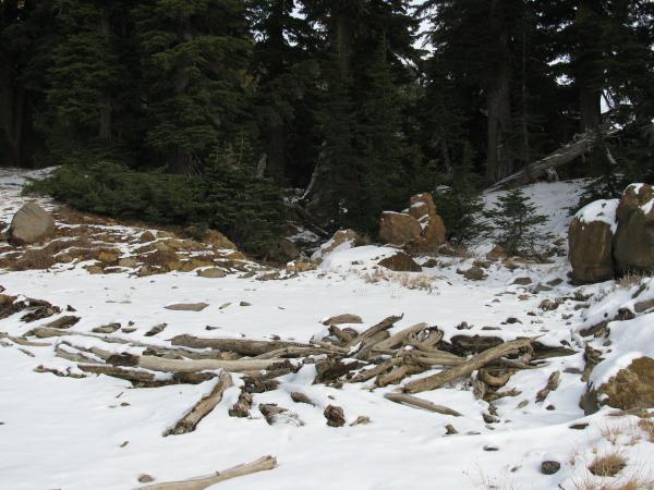 A litter of lumber from a long fallen tree.