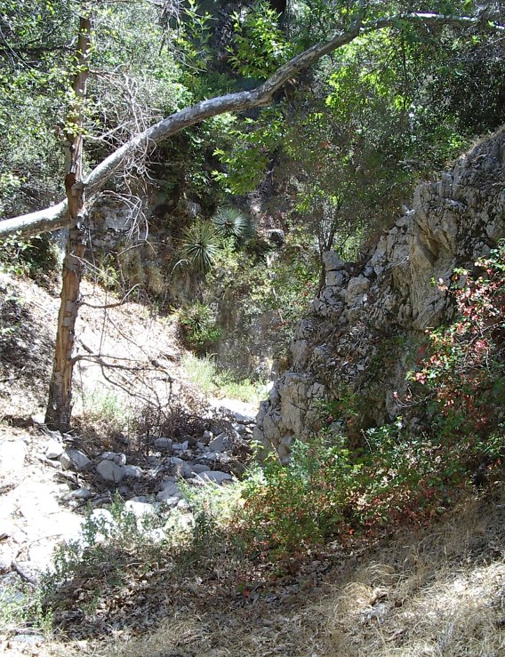 Narrow part of the dry canyon decorated with fall colored poison oak.