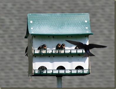 Birds 'n Such: August 2010