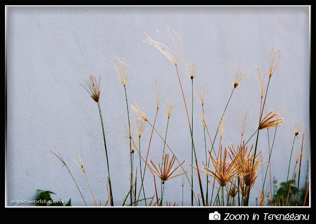 grass flowers picture
