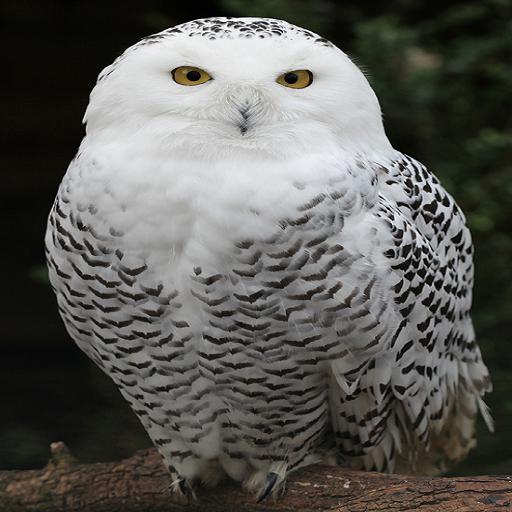 OWL LOGO-APP點子