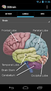 3D Brain - screenshot thumbnail