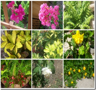 JuneGardeningCollage