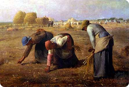 gleaners millet