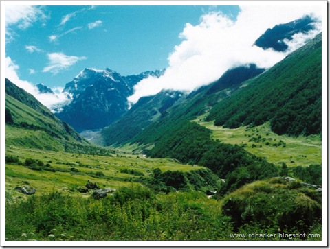 The Valley of Flowers - a great location at uttranchal to visit.