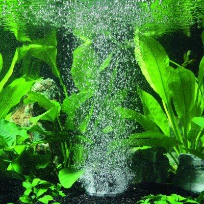 Woda akwarystyka - ryba akwariowa