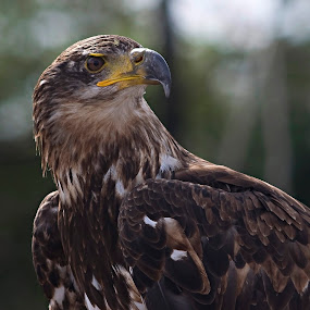by Al Duke - Animals Birds (  )