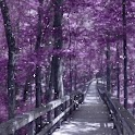 Snowy Purple Avenue In Dream logo