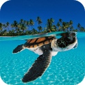 Turtle - PuzzleBox icon