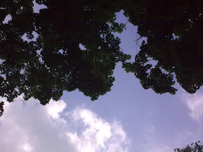 Парк Шевченка, небо та дерева
