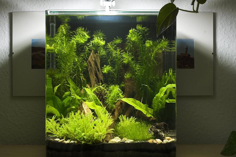 die wassersterne f hlen sich nicht wohl pflanzen allgemein aquascaping aquarium. Black Bedroom Furniture Sets. Home Design Ideas