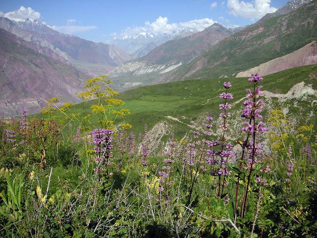 Au-dessus de Muk, 2800 m, vallée de Muksu (vue vers l'Est), Tadjikistan, 10 juillet 2007. Photo : F. Michel