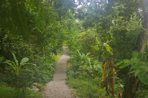 Jardin à Jinghong (Xichuangbanna, Yunnan), 30 août 2010. Lieu de passage de P. helenus, P. paris, P. polytes, D. hyparete, D. acalis pyramus, E. mulciber, E. phaenareta, L. atymnus, etc. Photo : J.-M. Gayman