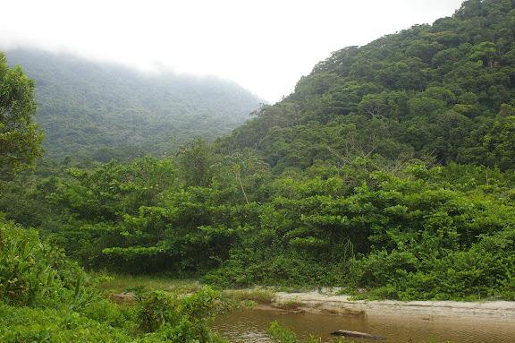 Itamambuca (à l'ouest de Picinguaba) : biotope de Morpho (Cytheritis) aega, HÜBNER, 1806. 14 février 2011. Photo : J.-M. Gayman