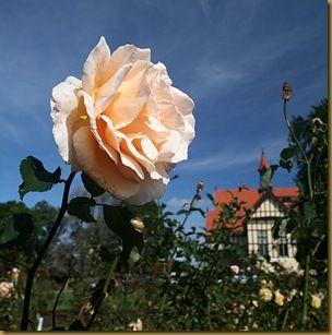 Rose house Rotorua