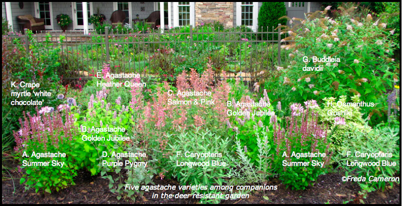 Defining Your Home Garden and Travel Agastache Garden Plan – Garden Plans Zone 7