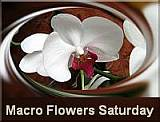Macro Flowers Saturday badge 4