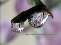 Raindrop on orchids-macro photography