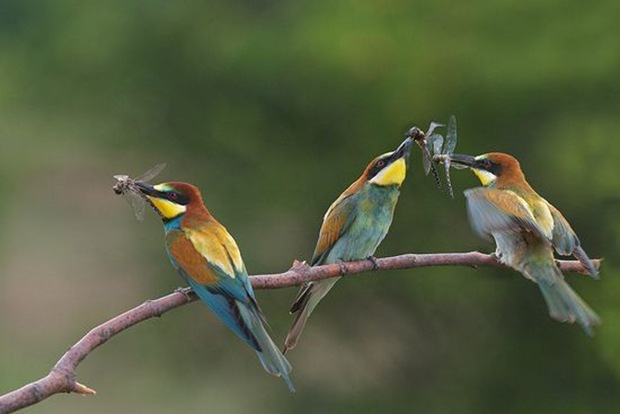 Wildlife-photography-of-birds1