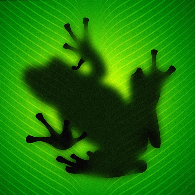 Frog-on-green-leaf-ipad-wallpaper