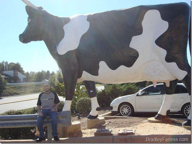 Kadie the cow in Columbus, Georgia.