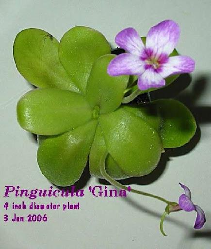 P_Gina_2006.jpg