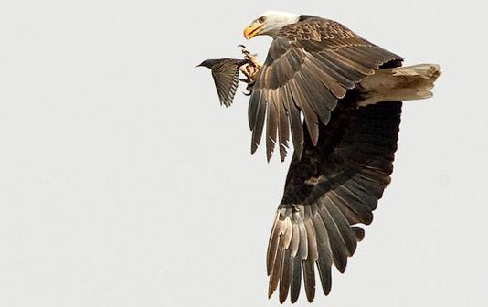 Ganadores de la 39ª Edición del Concurso Fotográfico de National Wildlife