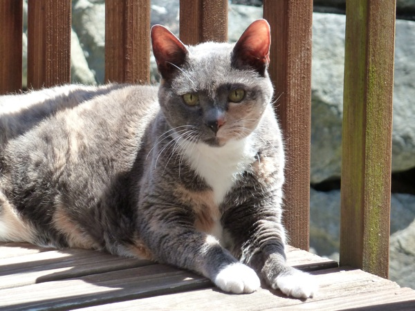 Cleo, enjoying a sunny day on the deck